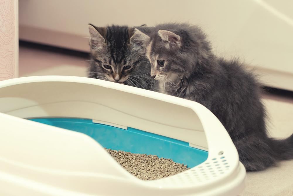 猫の便秘解消方法とは?放置すると危険な理由