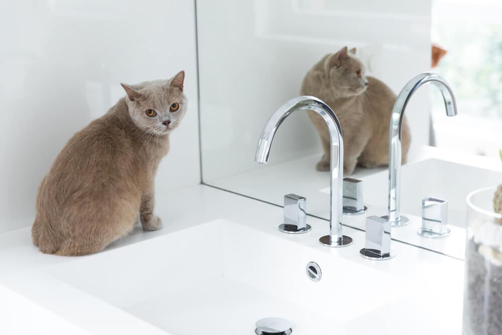 猫の便秘を放置するリスク