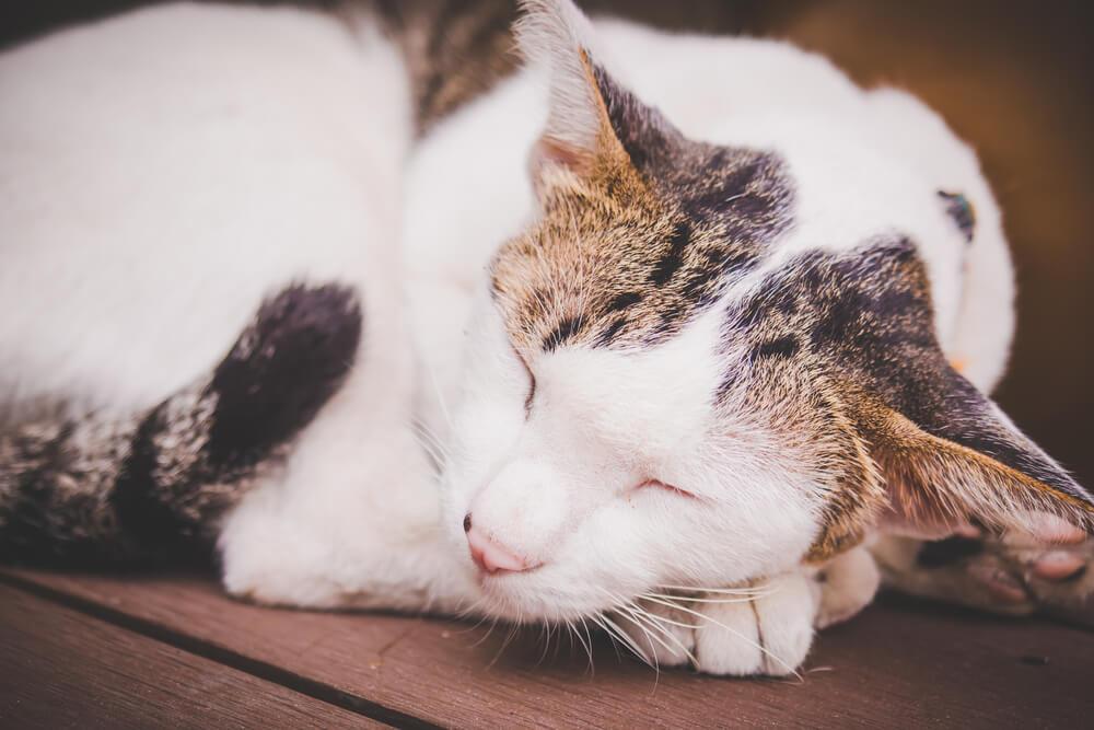 愛猫が便秘の時にやってはいけないこと