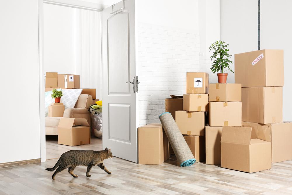 引っ越しによる猫のストレス症状とは