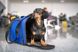 【プロドッグトレーナー監修】犬を飛行機に乗せるにはどうしたらいい?最新のペットのフライト事情
