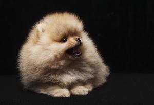 【プロドッグトレーナー監修】犬の夜鳴き(夜泣き)に困っています。その理由と対処法