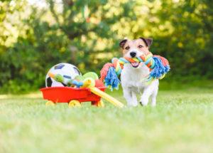 【プロドッグトレーナー監修】犬とおもちゃの大切な関係。愛犬のストレス解消を考える