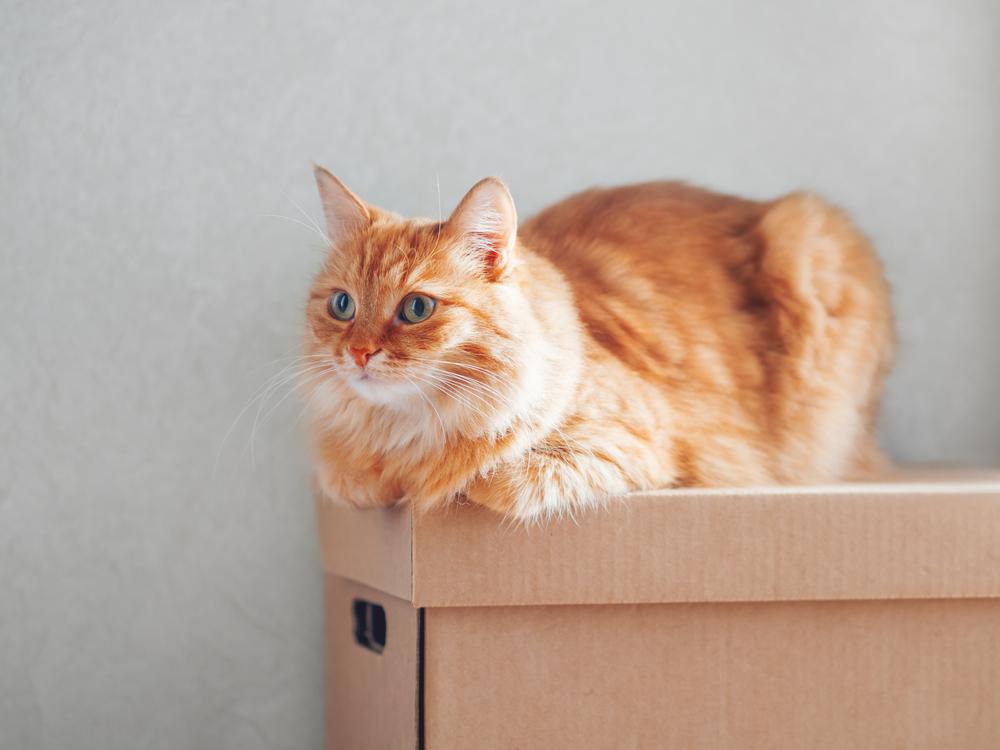 猫との引っ越し当日は特に注意