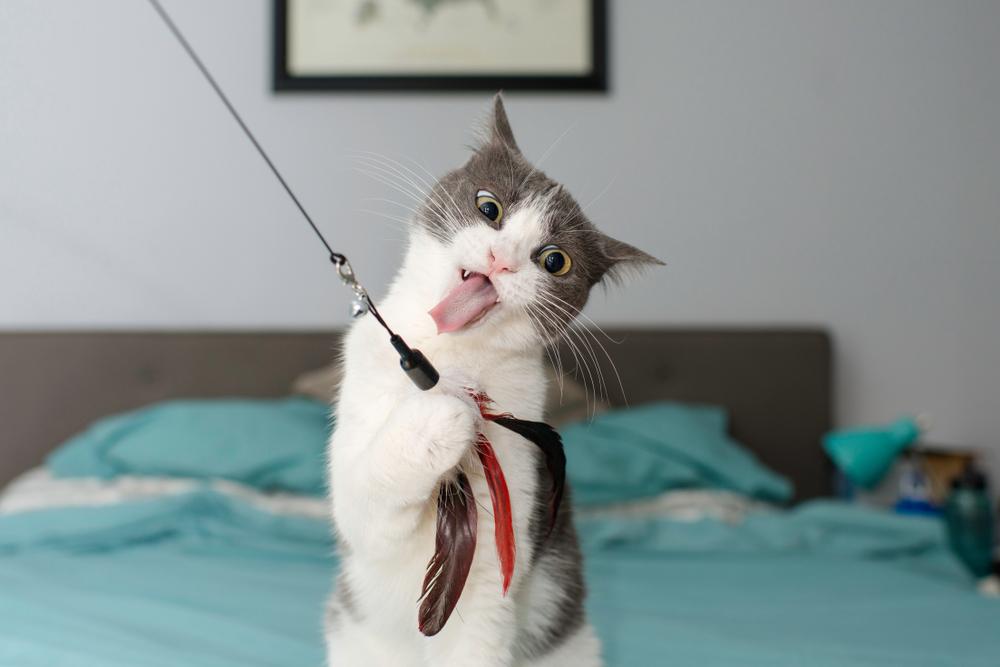 あんなに気ままな猫にもストレスがあるの?