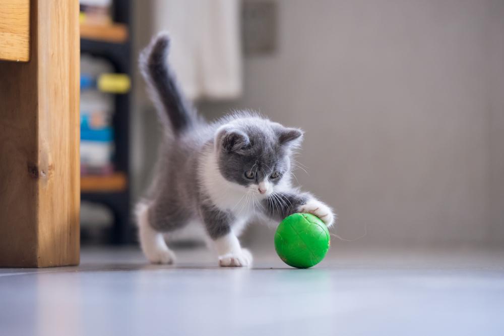 猫じゃらし以外のおもちゃは何がある?