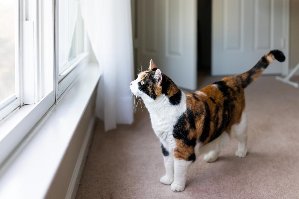 【猫と引っ越し】フェロモン製品を上手に使う