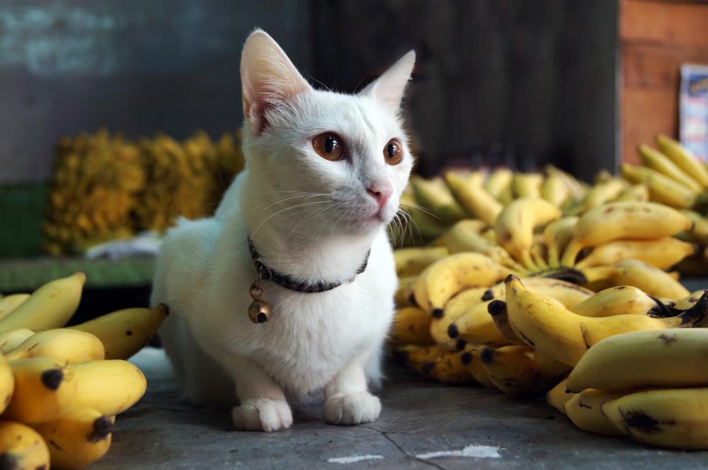 猫への上手なバナナの与え方