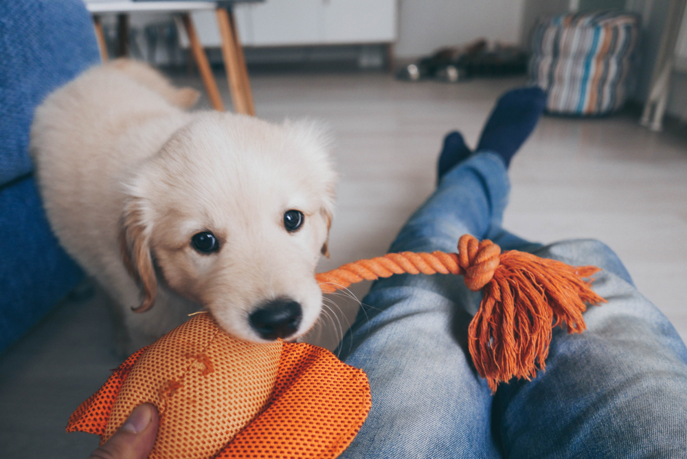 犬のおもちゃ遊びにどんなメリットがあるの?