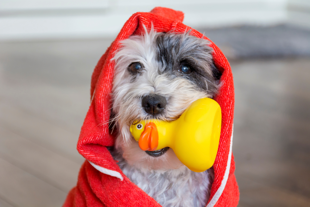 犬がおもちゃで遊ばない?