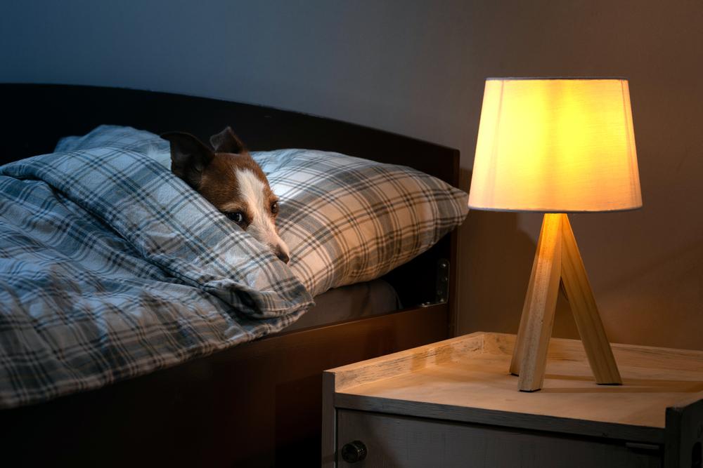 犬の夜鳴き(夜泣き)の理由と対策その③:分離不安。飼い主さんと離れられない!