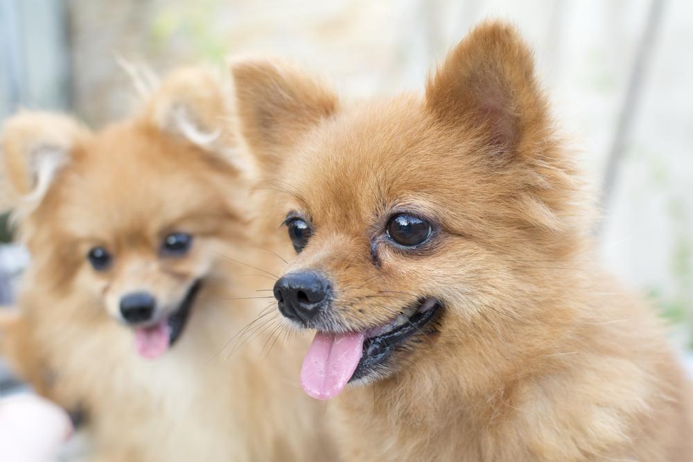 犬の分離不安の発症の原因とは?