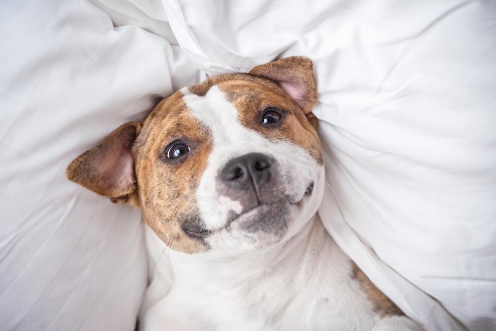 犬の夜鳴き(夜泣き)の理由と対策その④:寝場所が落ち着かない