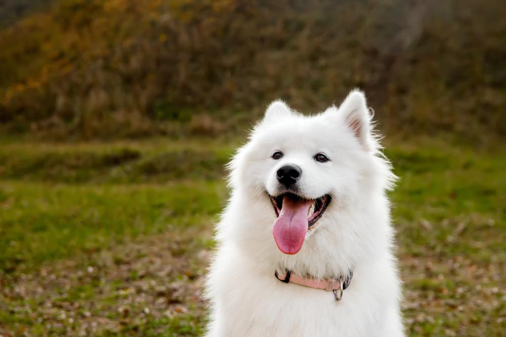 【つける前に一度考えよう!】暴力的、卑猥、呼ぶことに問題のある犬の名前