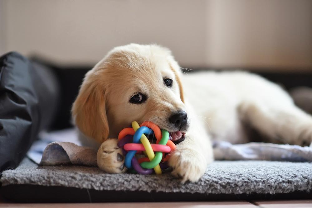犬におもちゃを使う時の注意点!