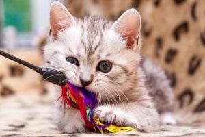 猫用おもちゃを選ぶときの注意点