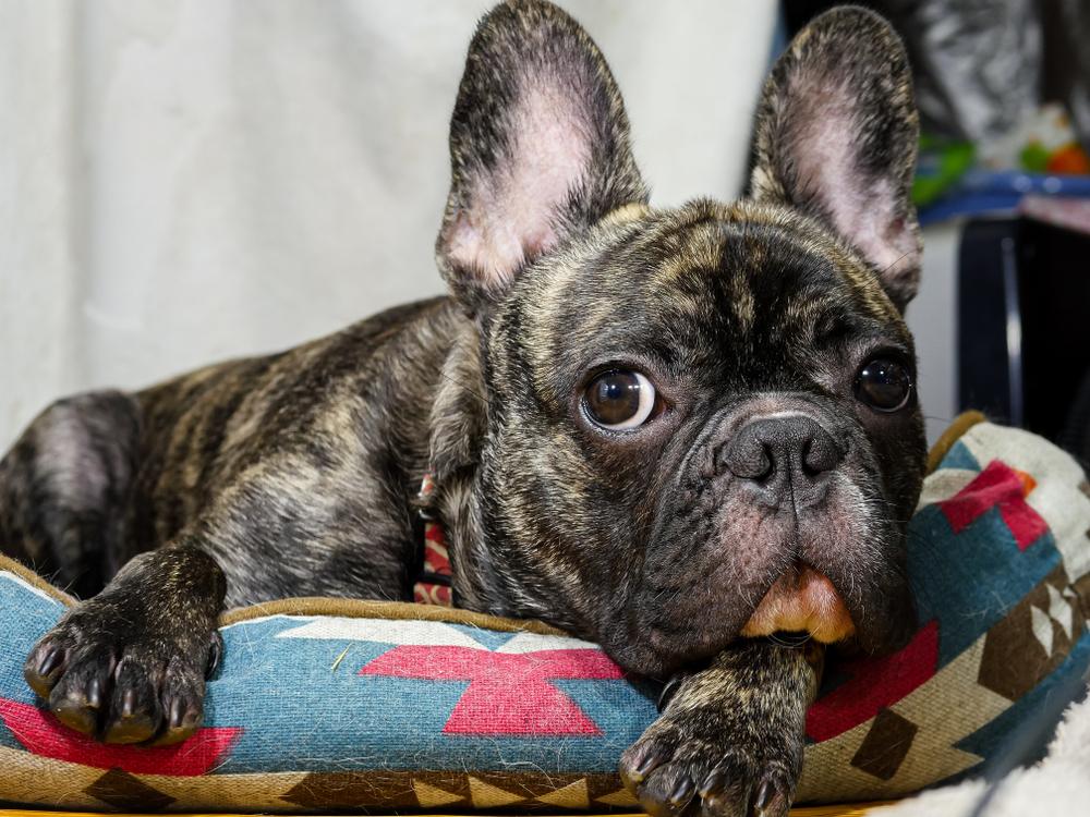 犬の夜鳴き(夜泣き)の理由と対策。その⑤:高齢化とココロとカラダの悩み