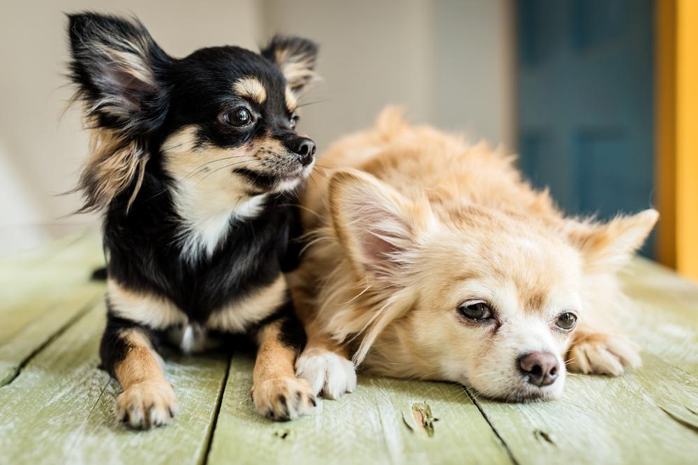 犬の分離不安。こんな対策はやっちゃダメ!