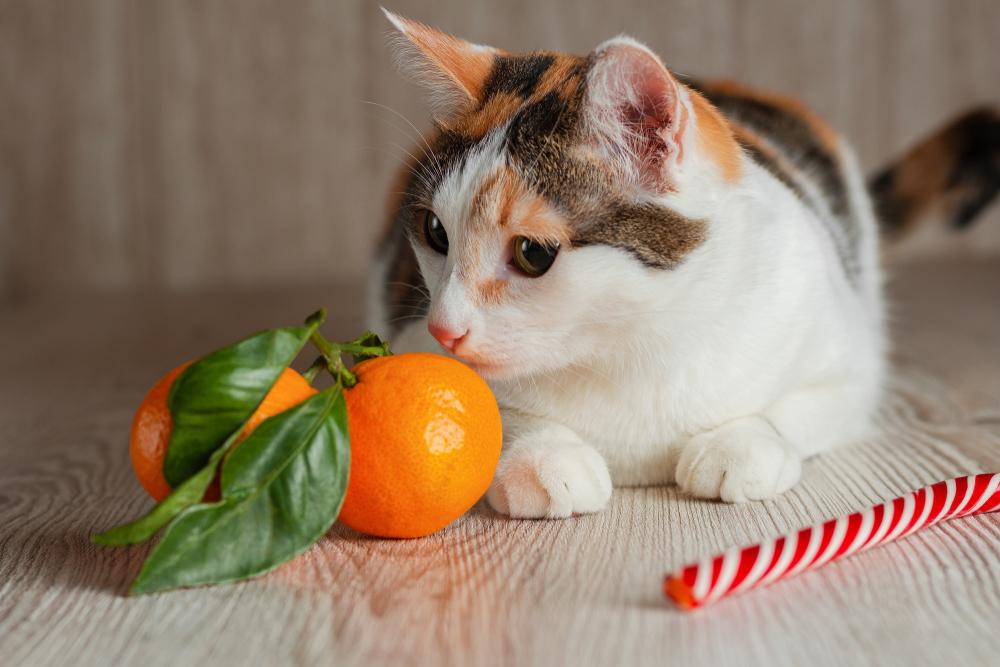 猫にあげてはいけない果物
