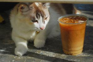 【獣医師監修】犬や猫にコーヒーは厳禁!意外と怖いカフェイン中毒