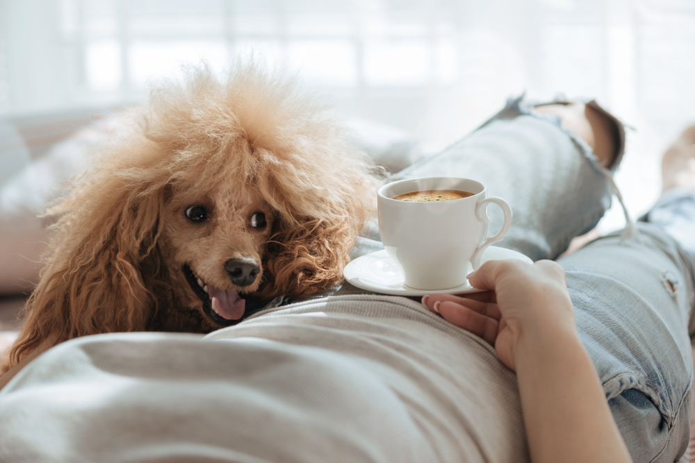 犬や猫がどれくらいカフェインを摂取したら危険なの!?