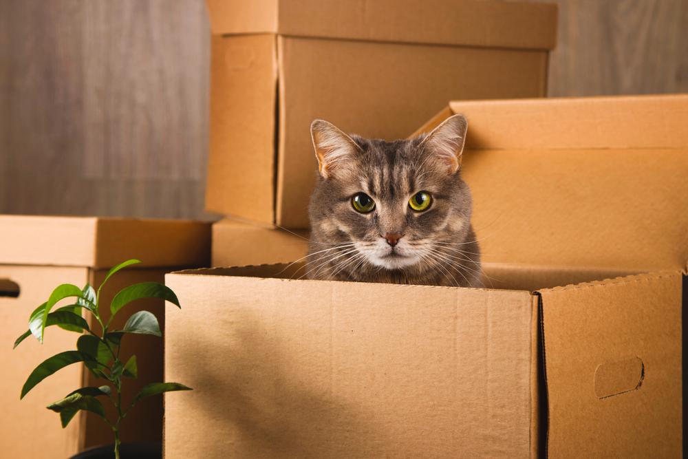 【獣医師監修】愛猫と引越し。ストレスフリーを目指そう