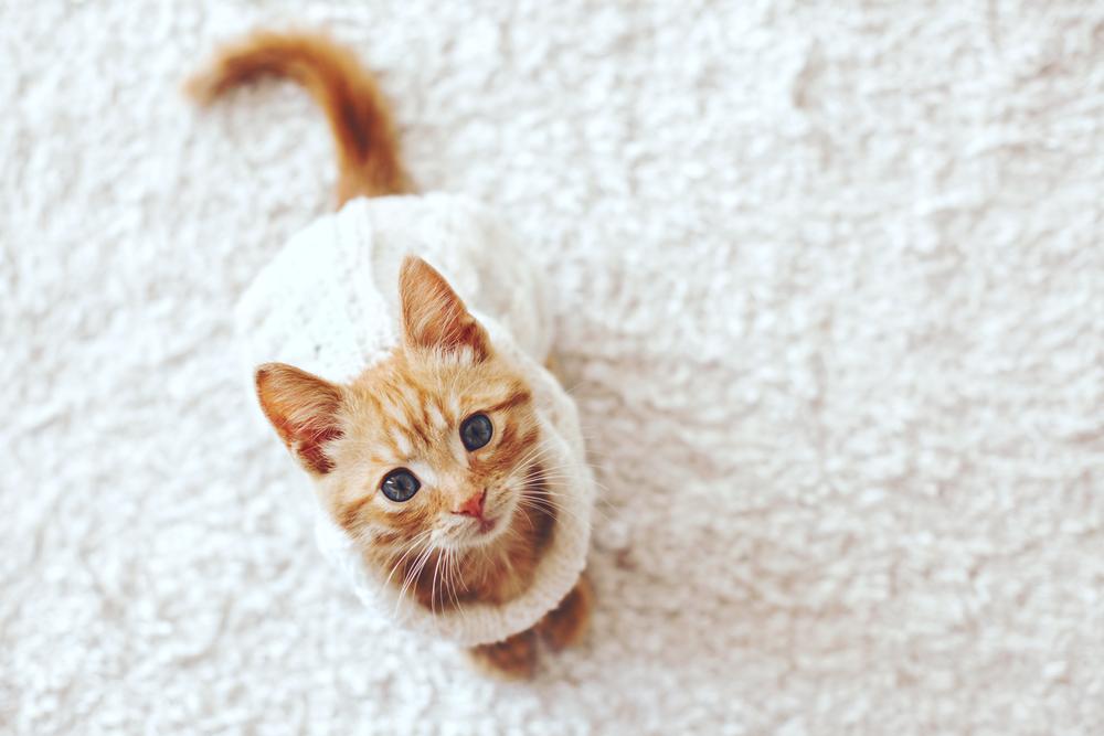 猫暮らしに最適なカーペットの選び方