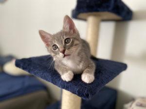 猫が大好き!猫におすすめのキャットタワーの種類