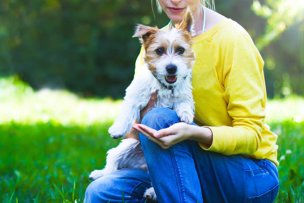 【プロドッグトレーナー監修】犬を抱っこする時の注意点。犬とのスキンシップのあり方