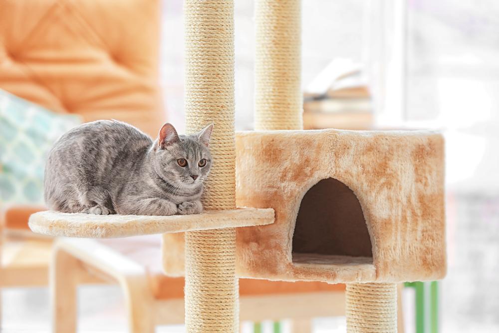 猫の運動には「キャットタワー」がぴったり