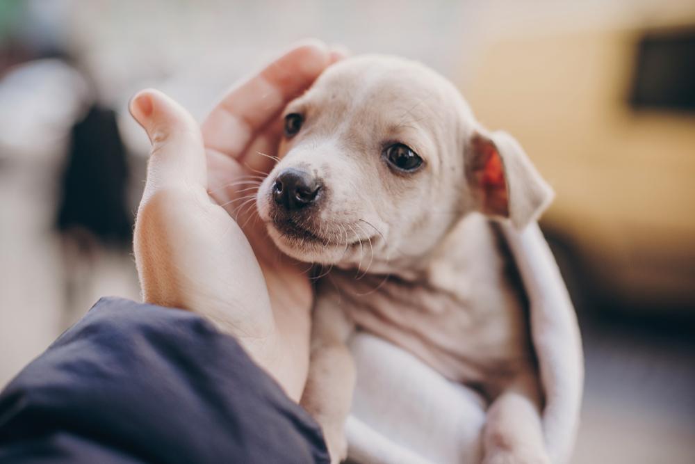 犬の触られたい、触られたくない気持ちを知ろう