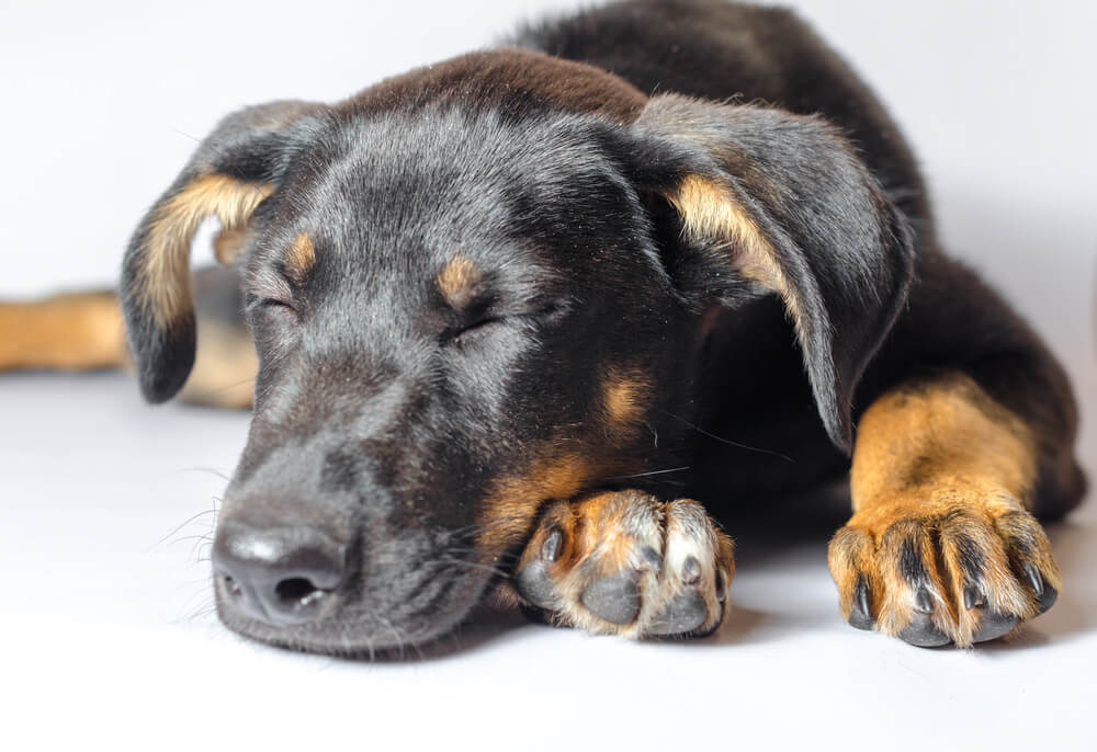 愛犬には、どれくらいの睡眠が必要なの?