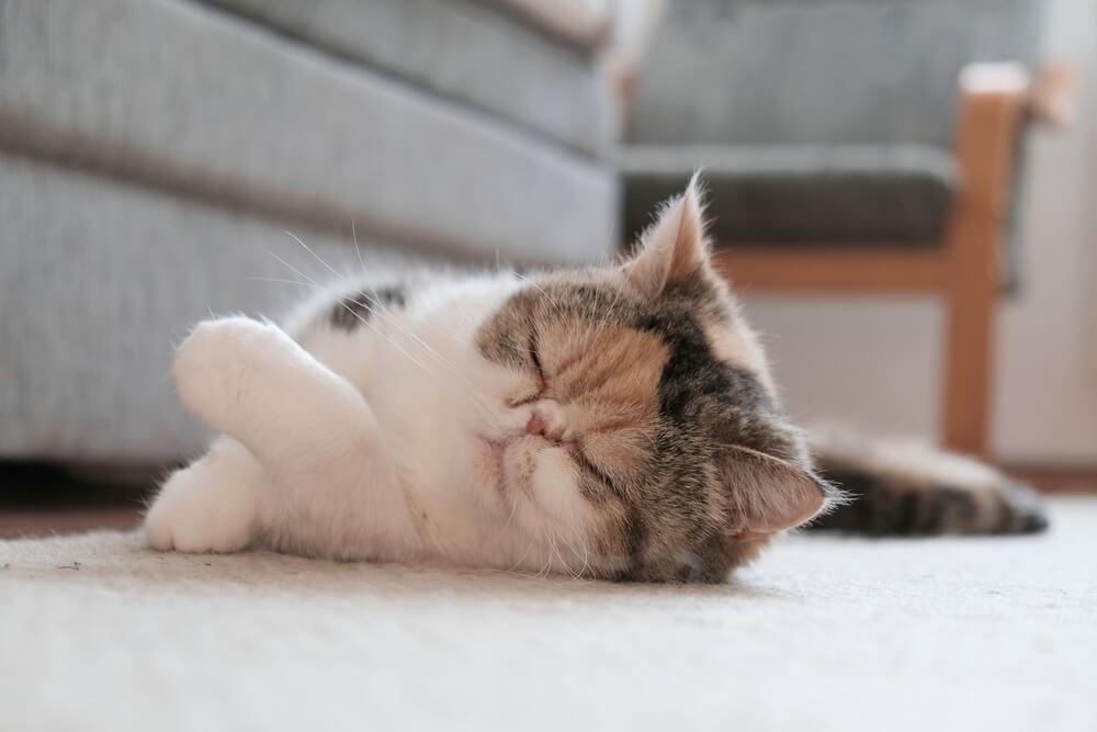 猫との暮らしは抜け毛との戦い