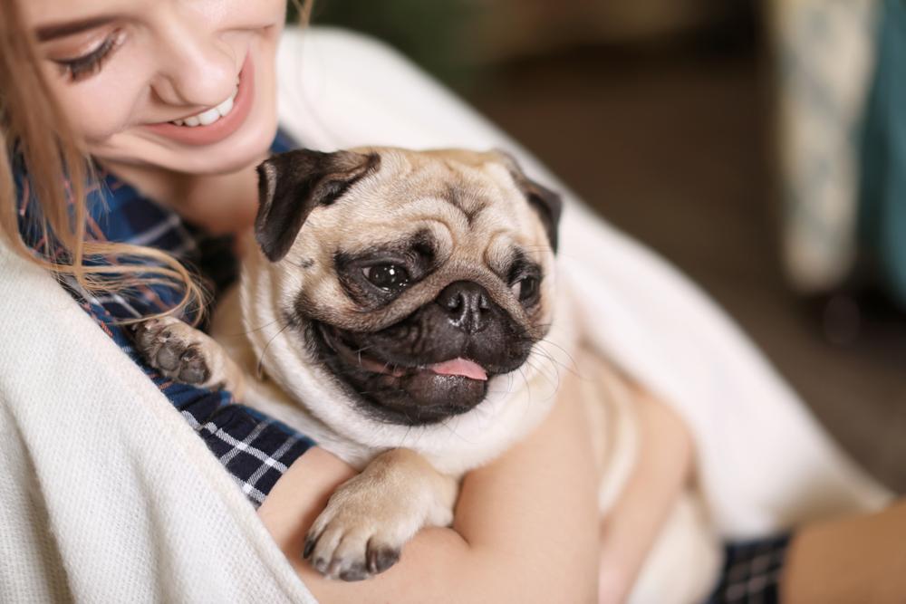 犬は抱っこは苦手で当然!という考え方を持つ