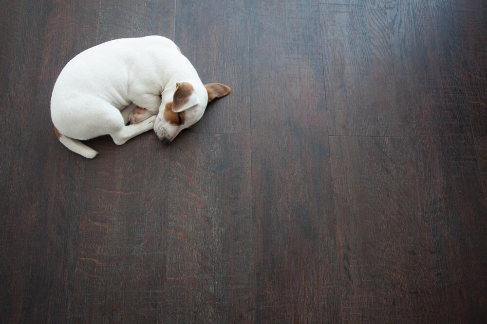 愛犬の足腰のために、どんな工夫ができるの?