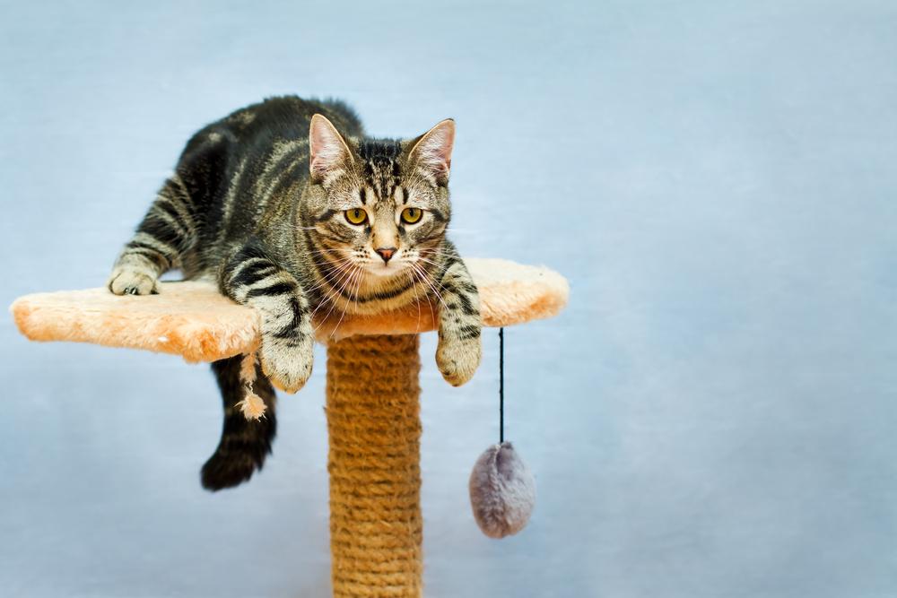 「愛猫」に合ったキャットタワーの選び方
