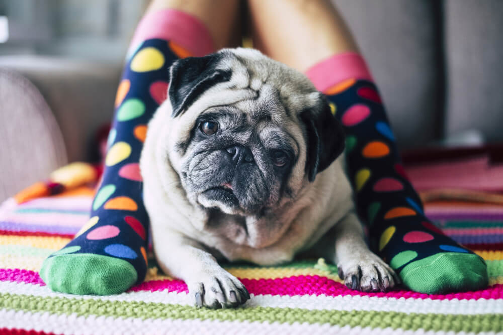 犬の足は、左右に広がらないって知ってる!?