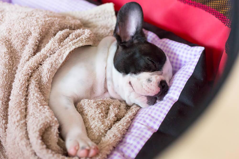 犬の睡眠時間は一日の半分くらい