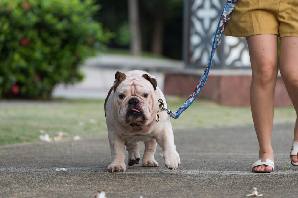 お散歩は愛犬のための、リフレッシュの時間