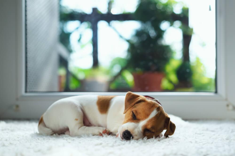 大好きな愛犬に、快適な睡眠を!