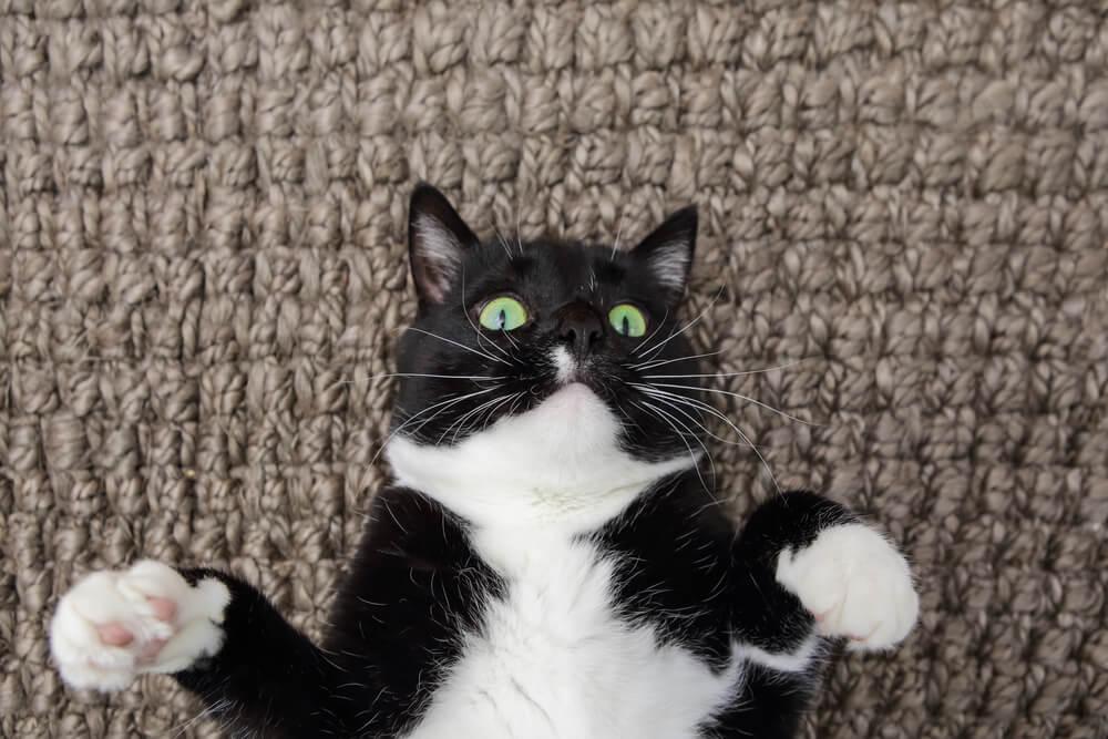 場所や季節によってカーペットを使い分ける方法も|猫との暮らし