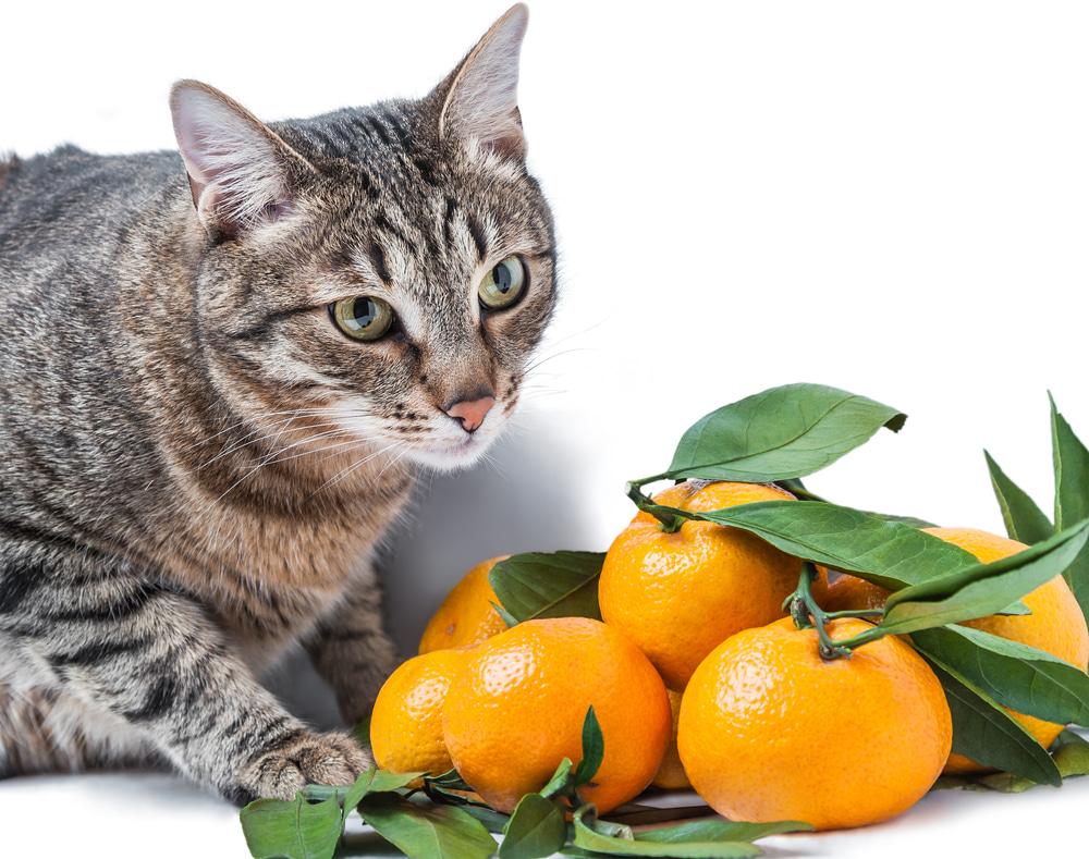 果物は猫に与えてもいいの?食べてもよい果物といけない果物を知っておこう