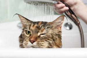 猫をお風呂に入れたい!覚えておきたい猫の正しい入浴方法
