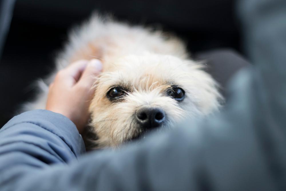 【プロドッグトレーナー監修】犬の体臭ってどんな仕組み?ニオイの対処法ってあるの?