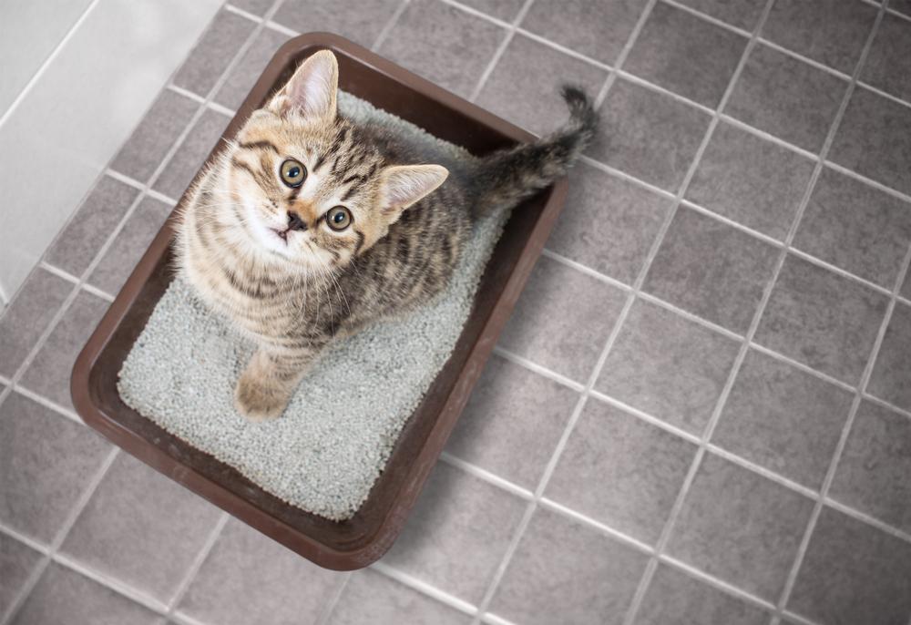 猫が快適なトイレとは?愛猫が喜ぶトイレ環境づくり