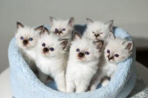 猫の多頭飼いに必要な準備や上手くいくコツは?
