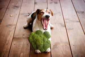 【プロドッグトレーナー監修】野菜を犬に与えてもいいの?食べてもよい野菜といけない野菜を知っておこう