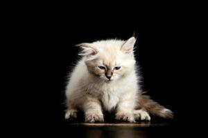 猫にまたたび。正しい扱い方と注意すること