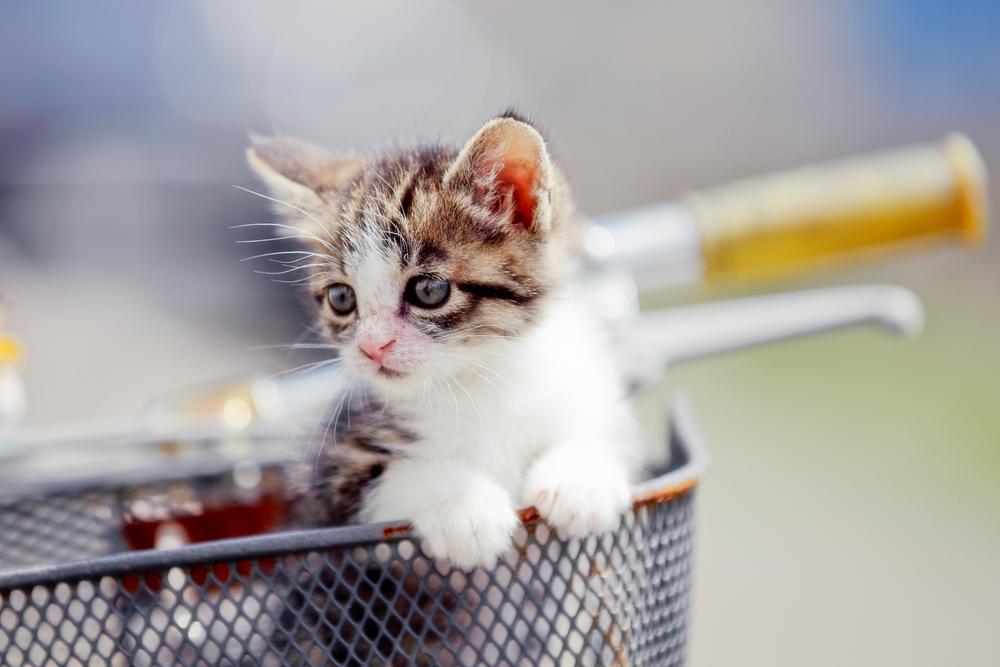 猫を自転車に乗せるときに気をつけること