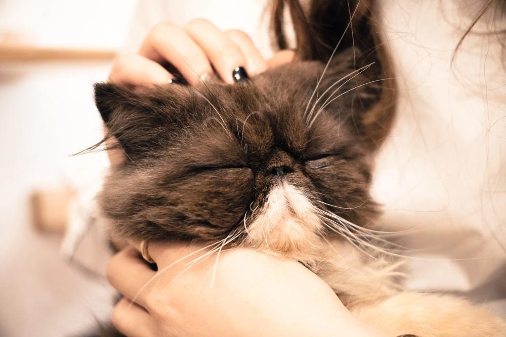 まずは猫の正しい抱っこの仕方を確認しよう